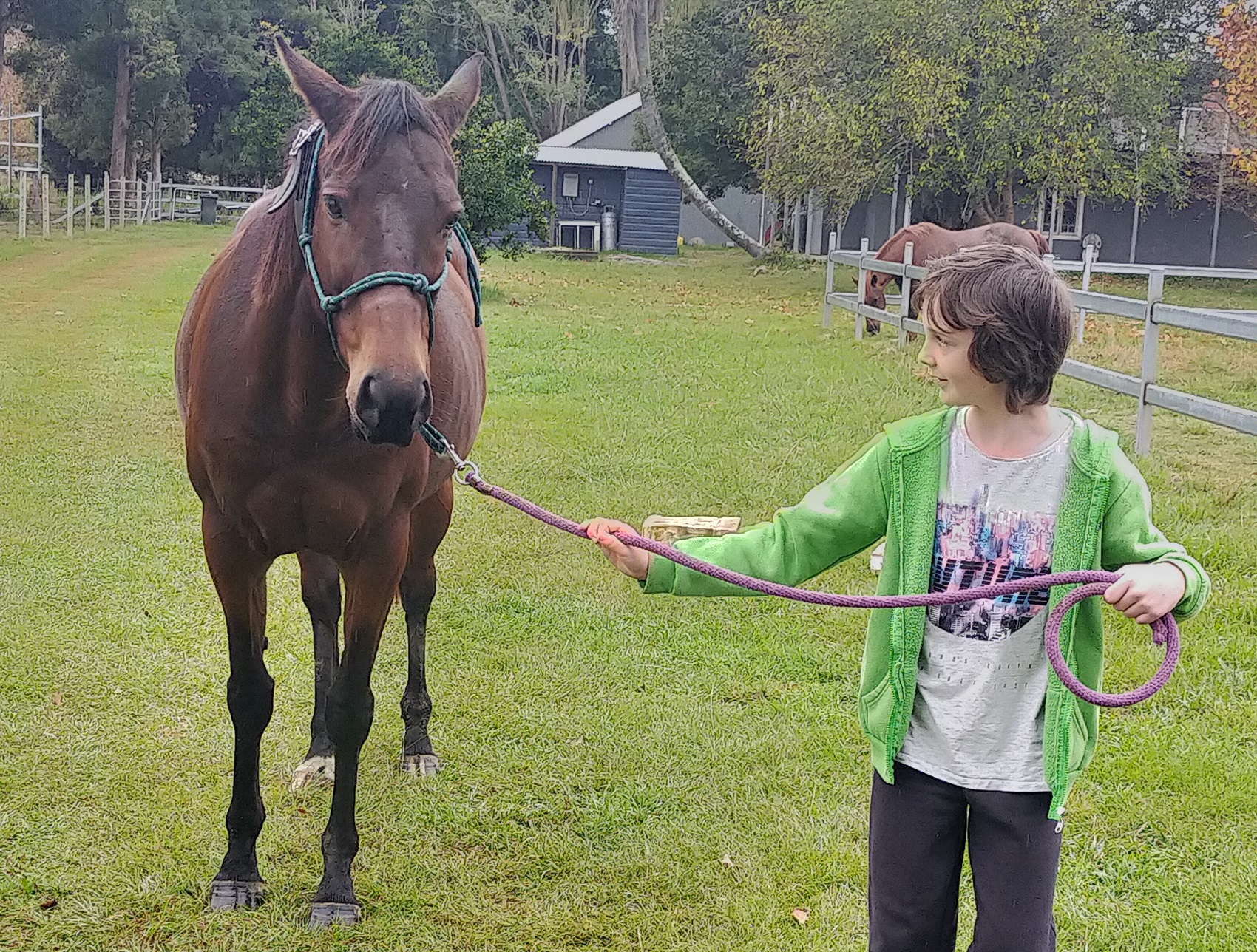 ethan equine therapy